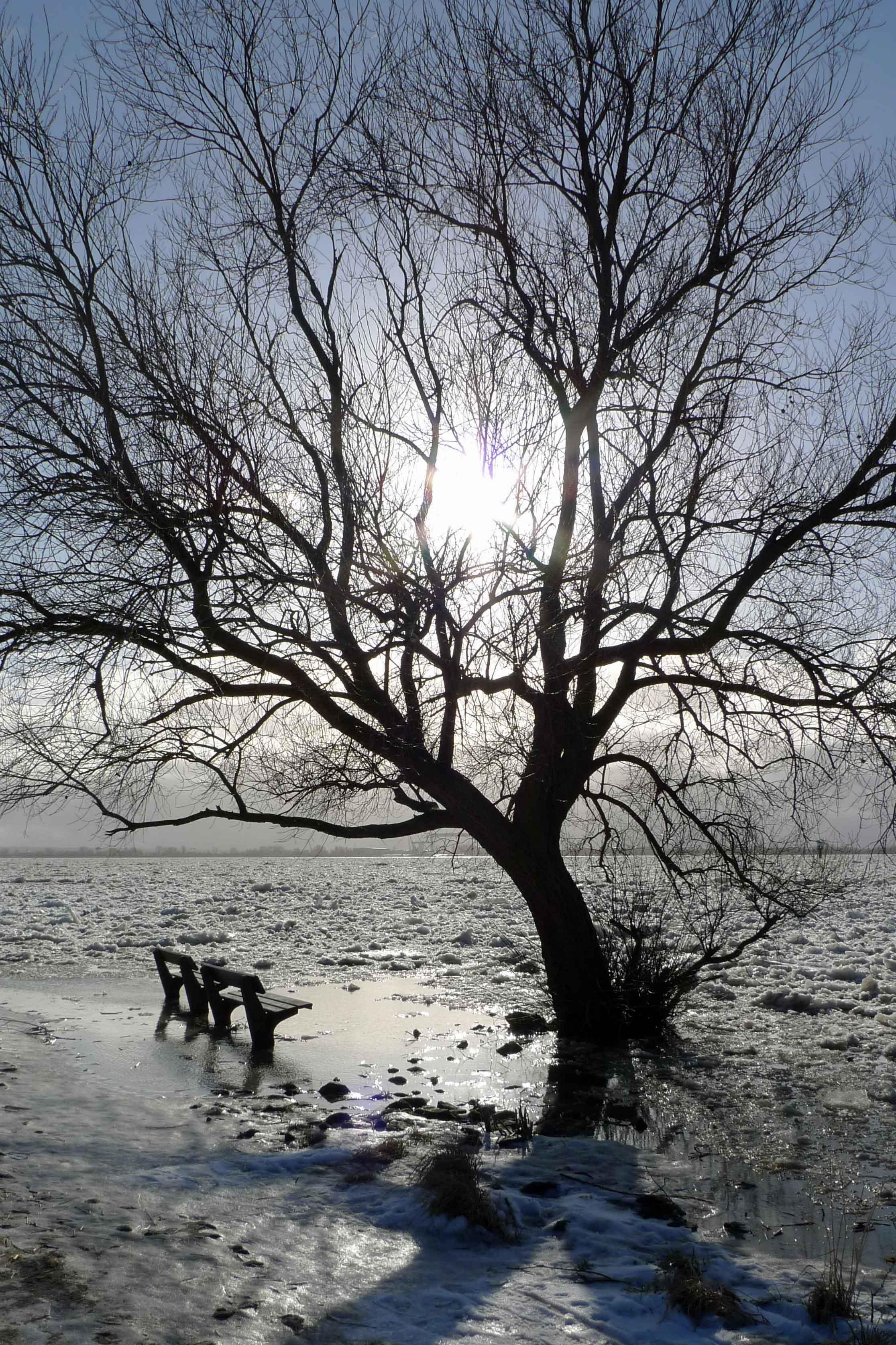 Winteridylle an der Elbe. Nur mein Hund Julchen kann das nicht leiden, weil sie wegen der Eisschollen nicht baden und tauchen kann
