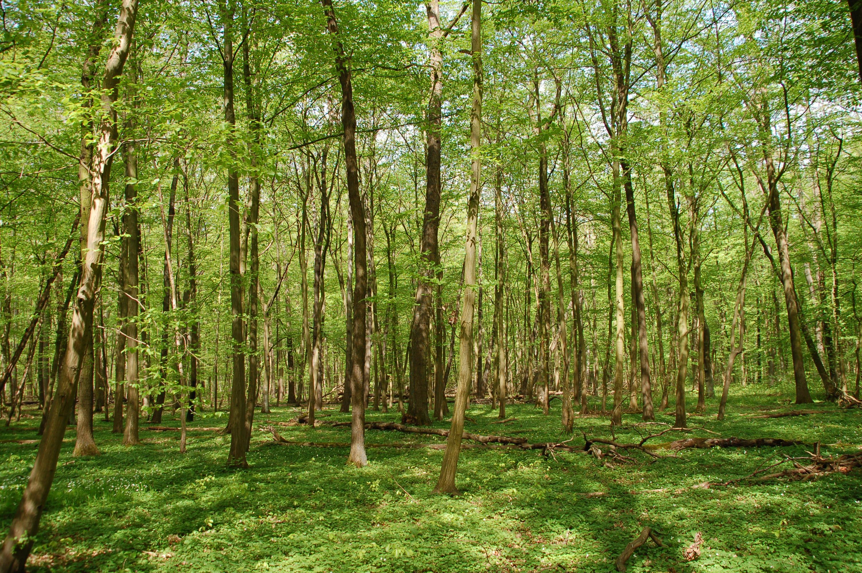 Der Nationalpark Hainich ist das größte zusammenhängende Laubwaldgebiet Deutschlands.