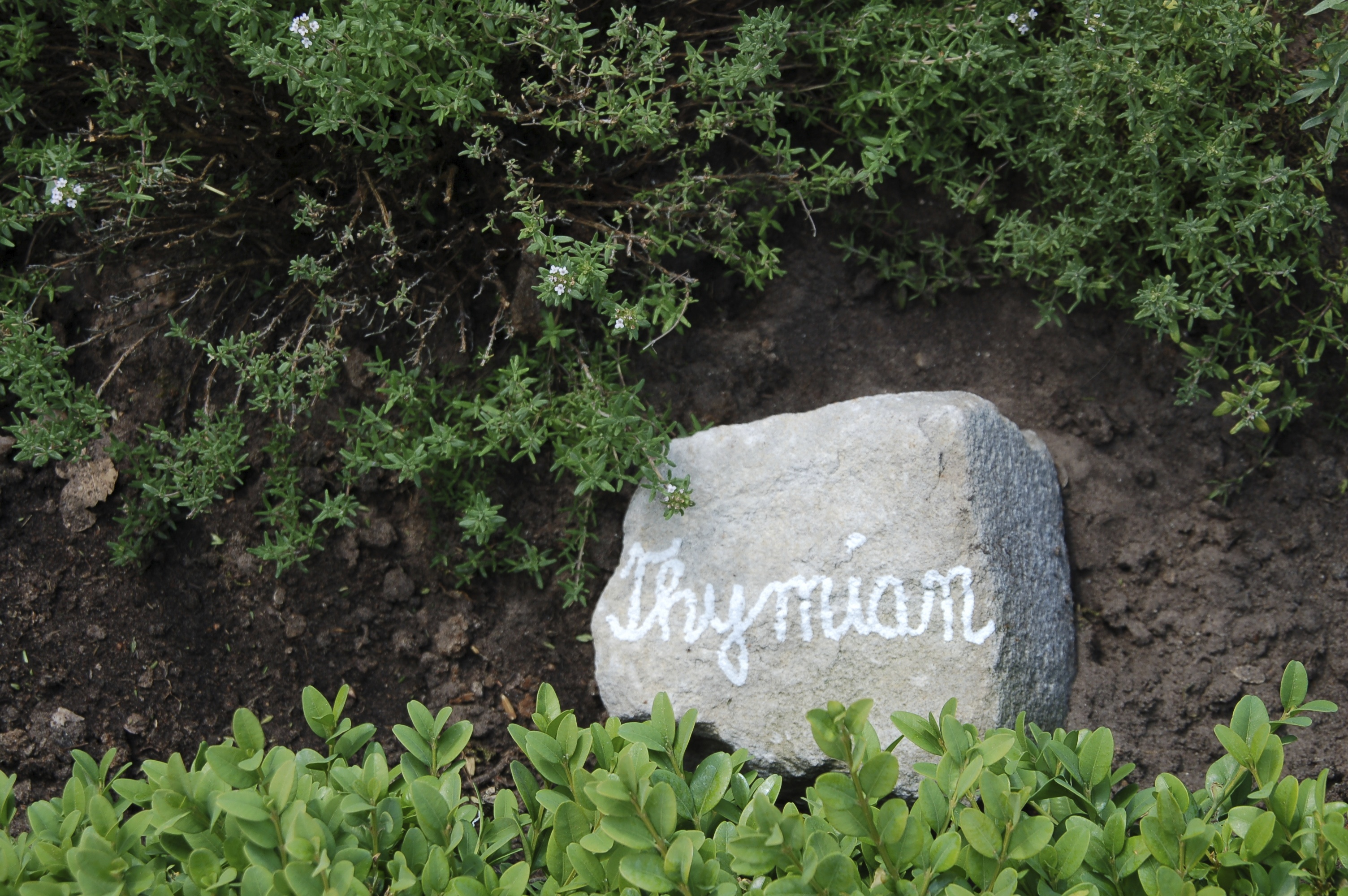 Beetbeschriftung auf Stein, Thymian