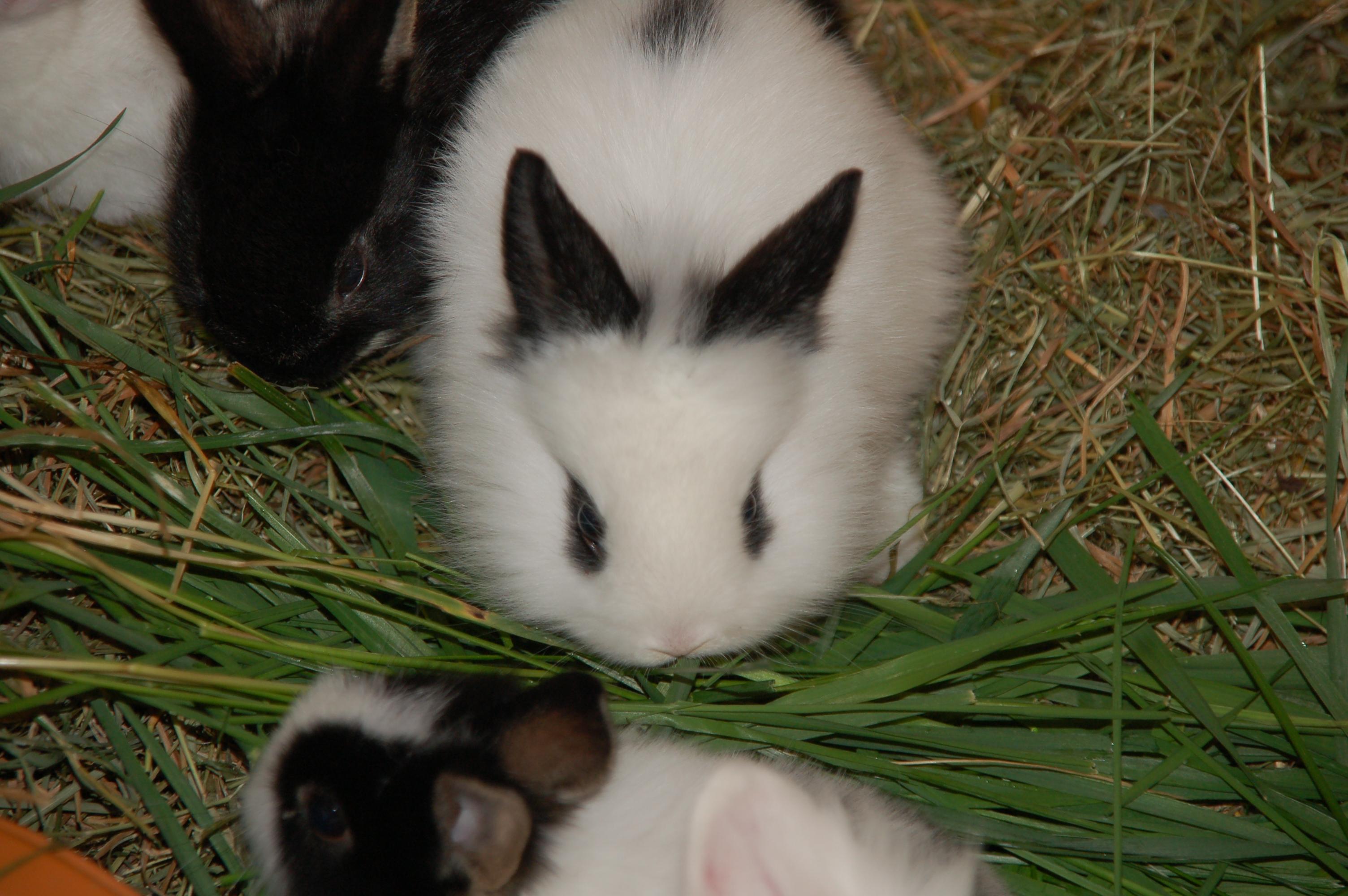 Kaninchenjunges