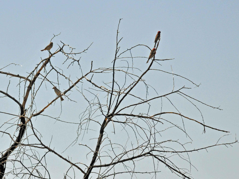 Nackte Äste mit kleinen Vögeln