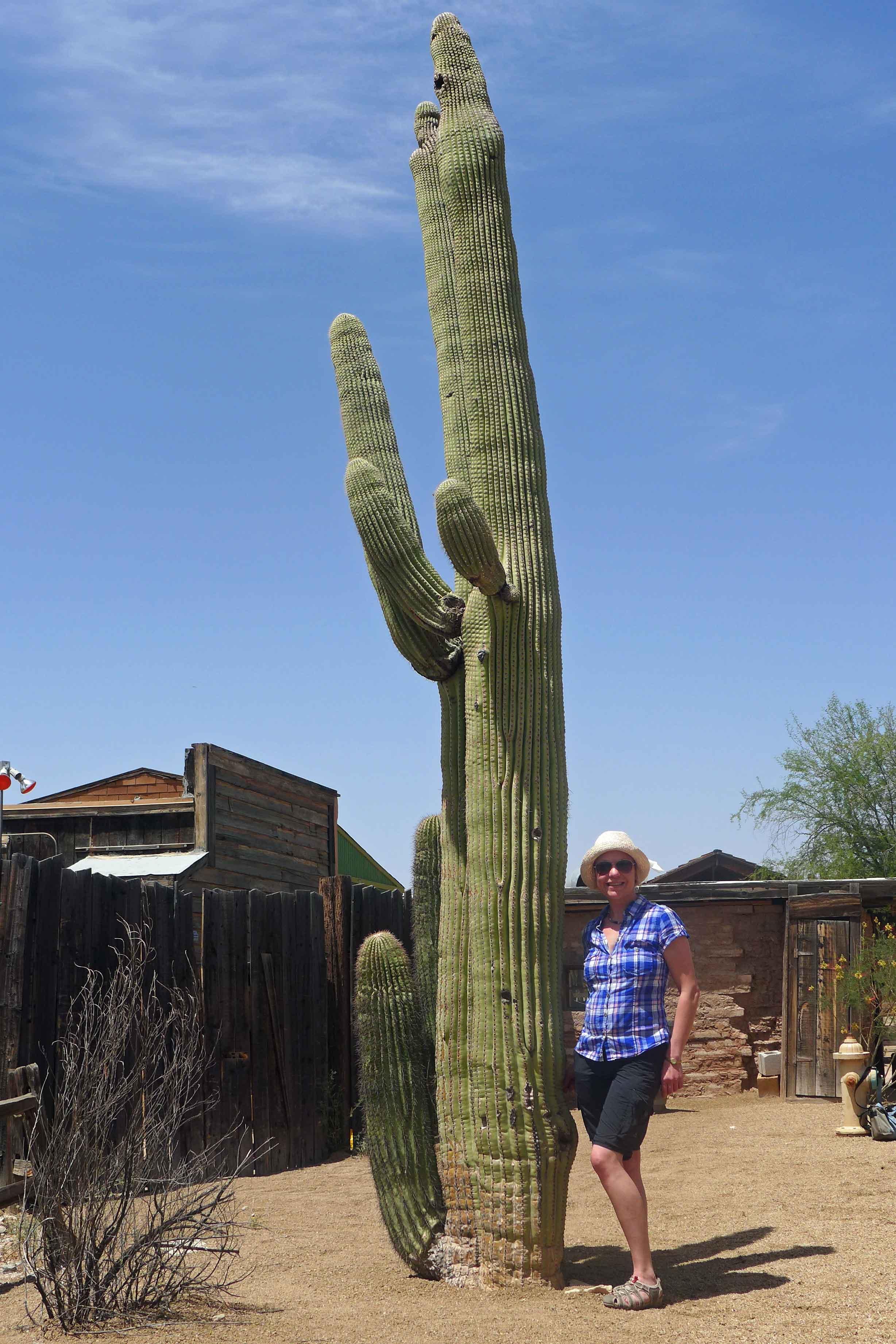 Saguaro Kaktee und die Autorin
