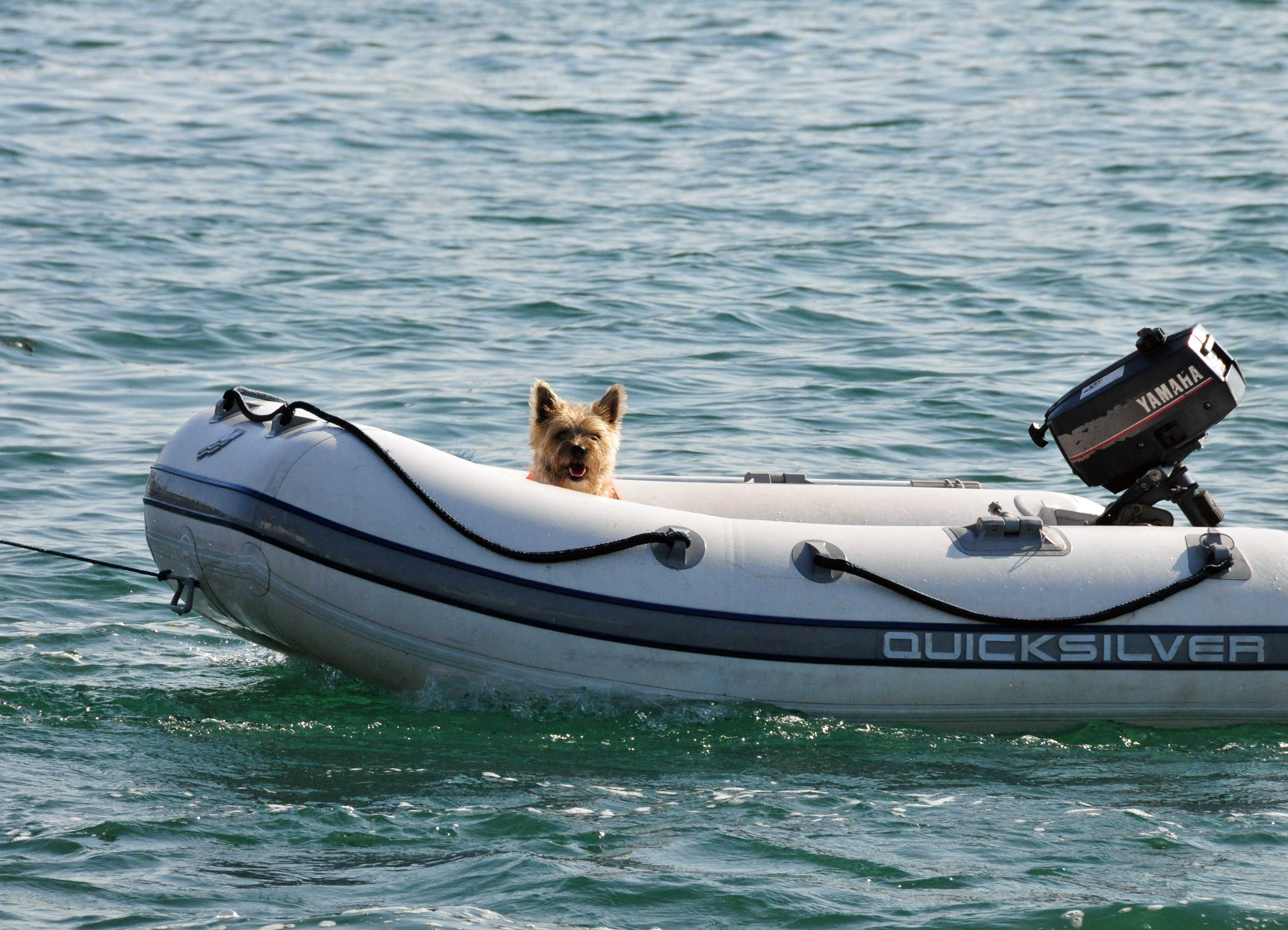 Ein Terrier fährt alleine im Schlauchboot.