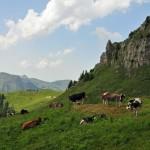 Schweiz –Kloster, Klettern, Kühe