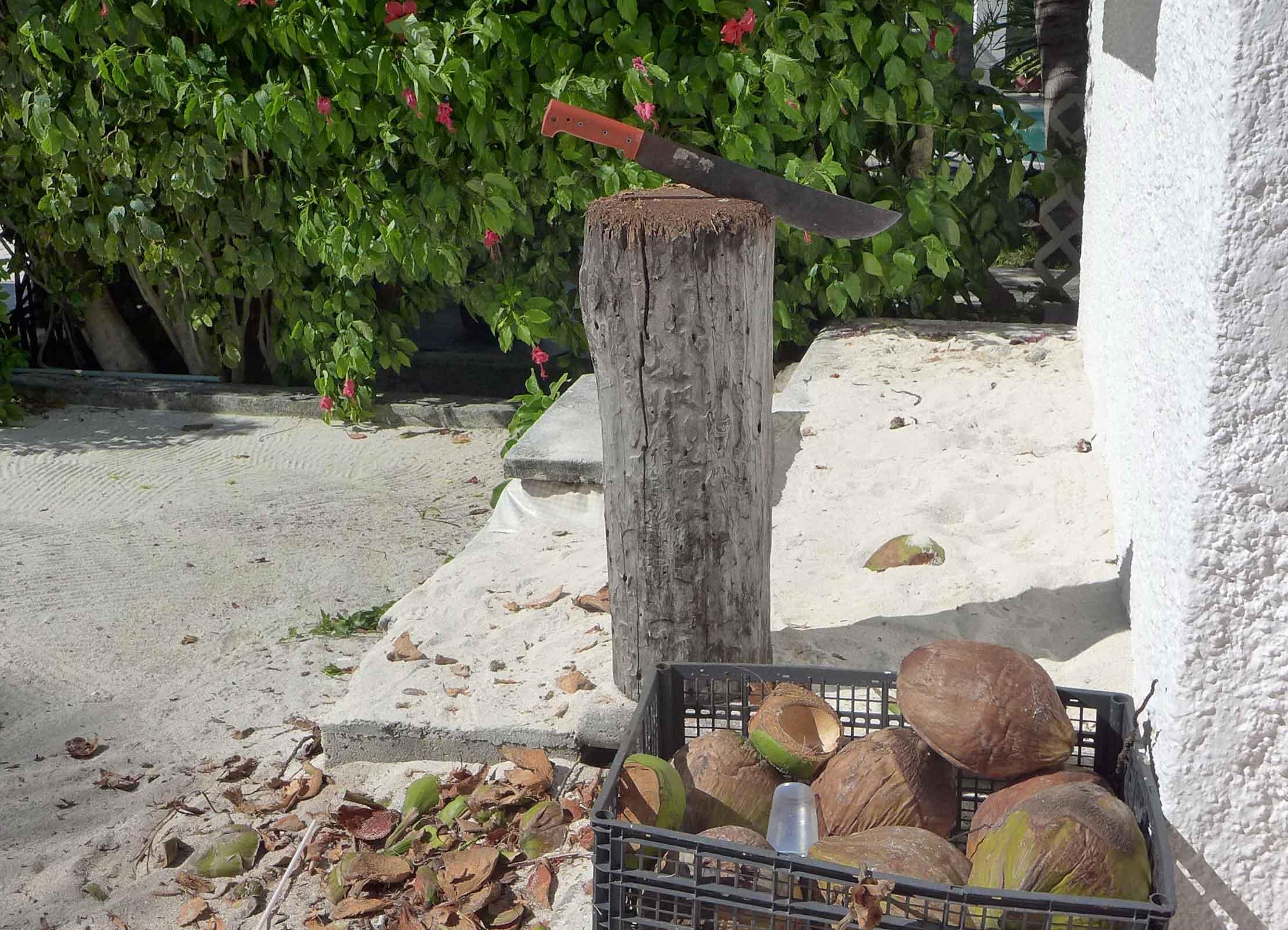 Machete auf einem Hackklotz und Kokosnüsse davor.