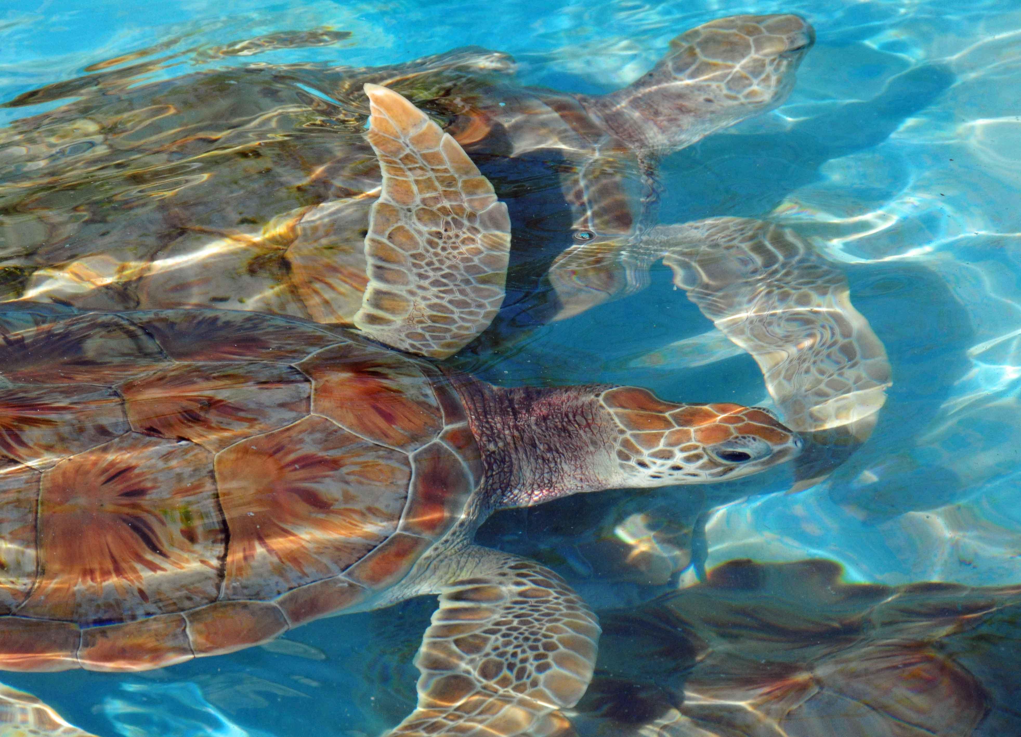 turtles_DSC_4605