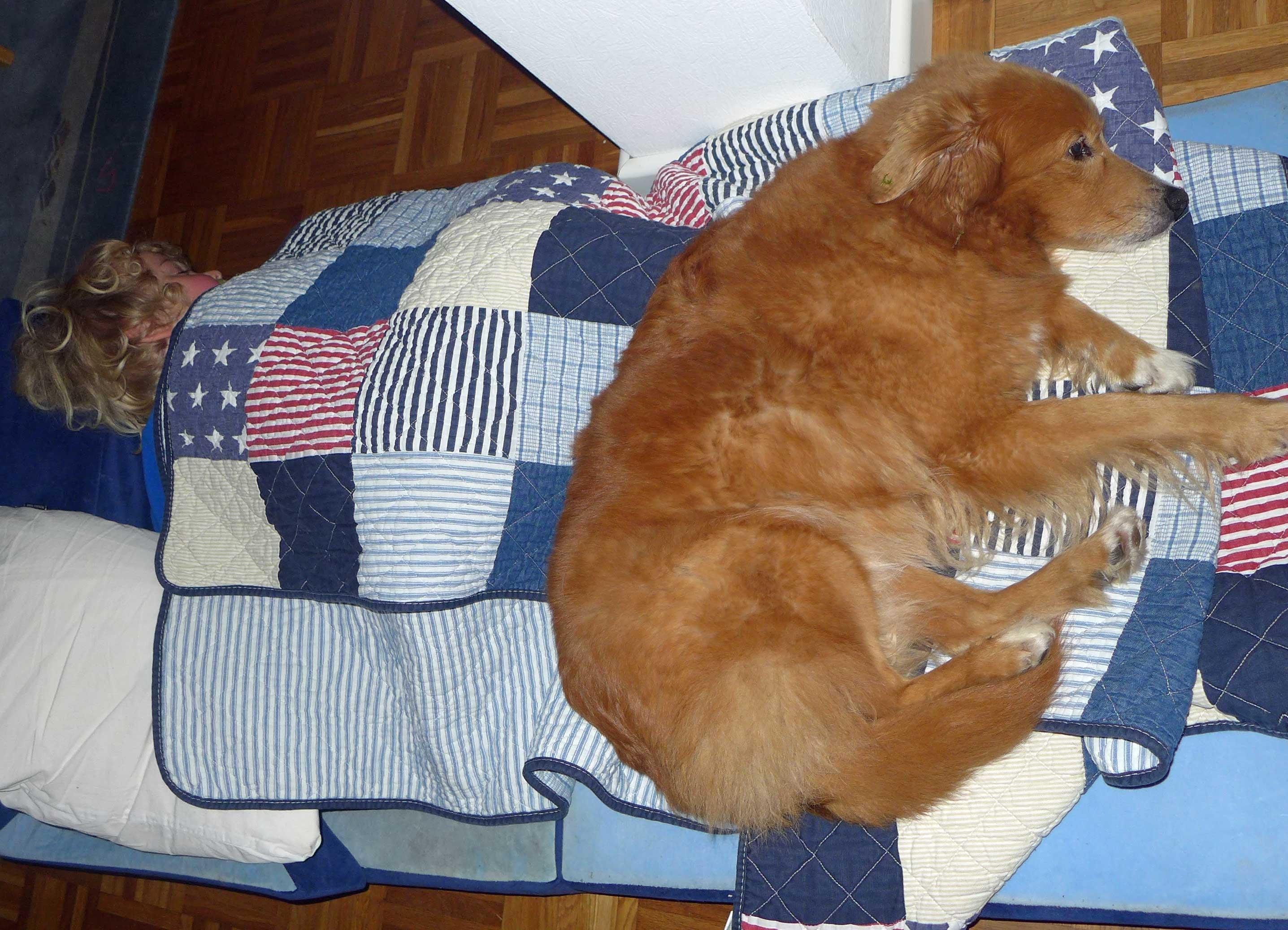 Kind und Hund schlafen in einem Bett