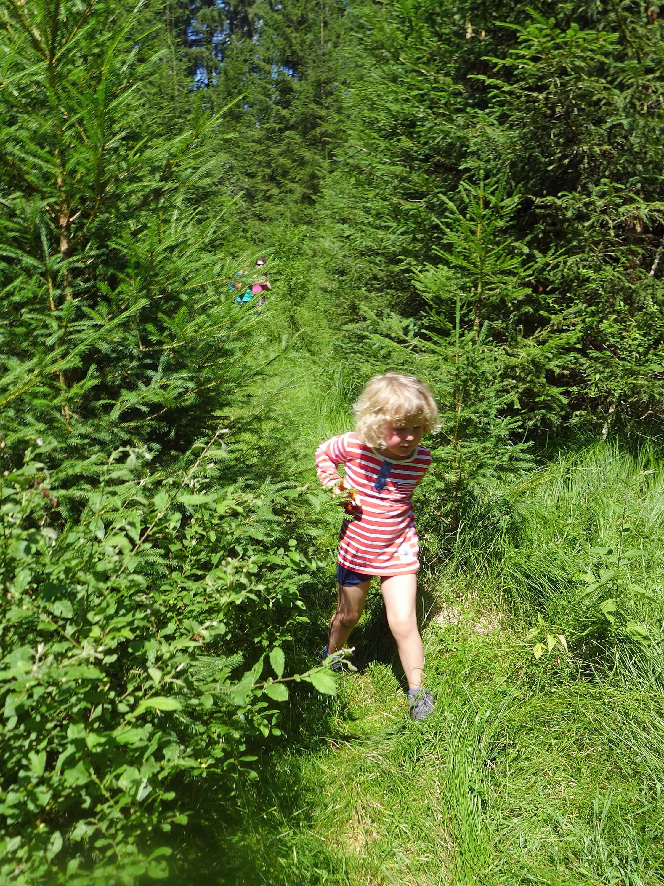 Kleinkind kämpft sich durch hohes, grünes Gras im Nationalpark Bayerischer Wald