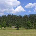 Wildniscamp am Falkenstein im Nationalpark Bayerischer Wald: Wo wilde Kerle willkommen sind