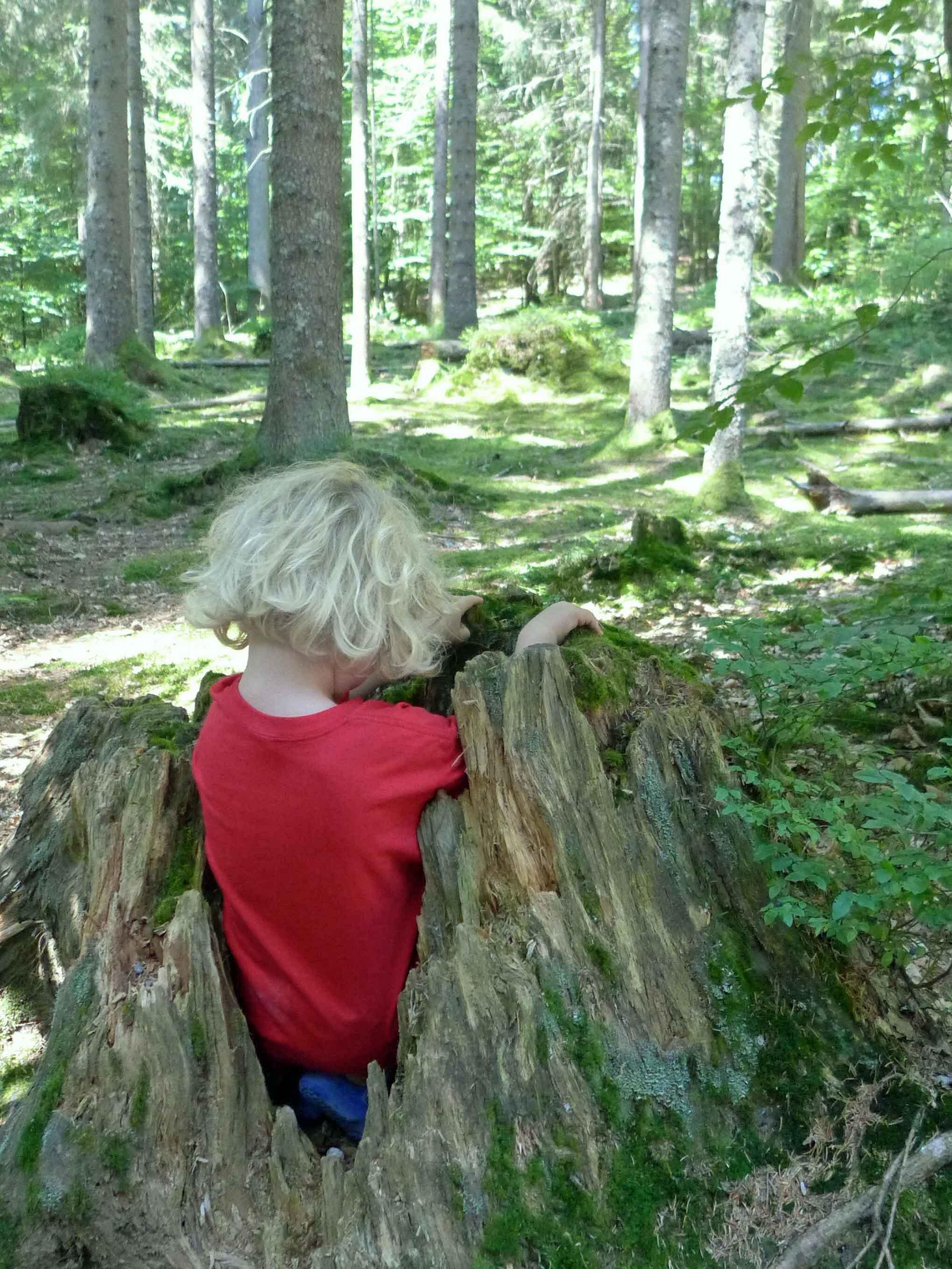 Der Nationalpark Bayerischer Wald ist ein großer Abenteurspielplatz
