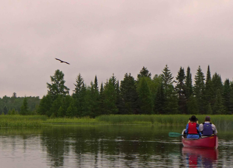 Ein Weißkopfseeadler fliegt über ein Kanu auf dem Pinawa Channel