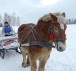 masuren-pferd-150_