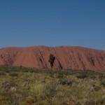 Kamele in Australien – Rauf auf die Höcker!!!
