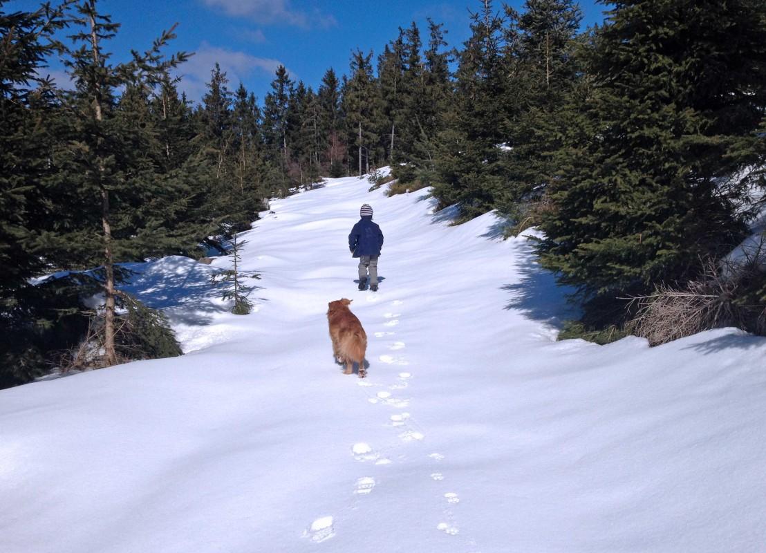 Kind und Hund laufen auf einem unberührten Schneeweg im Nordschwarzwald