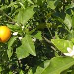 Geheimtipps für Sizilien und ein Rezept für Granita