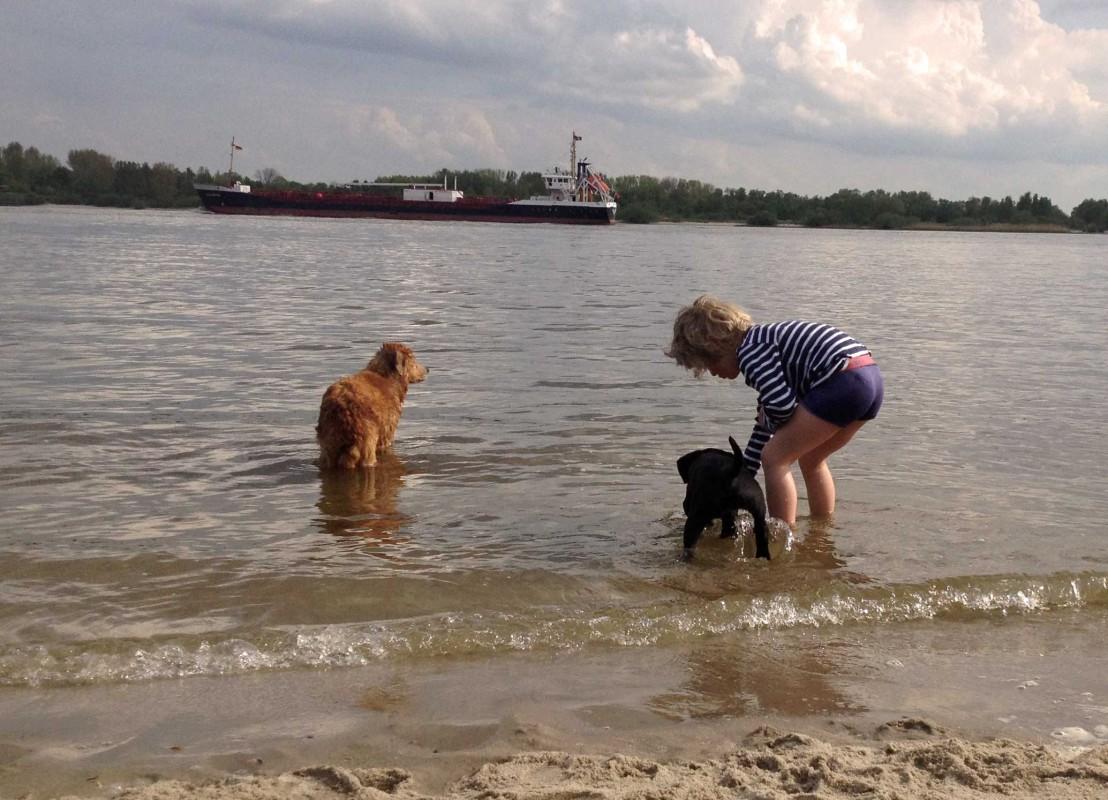 Kind und zwei Hunde planschen in der Elbe