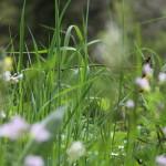Baiersbronn: Wildkräutersalat im kulinarischen Wanderhimmel