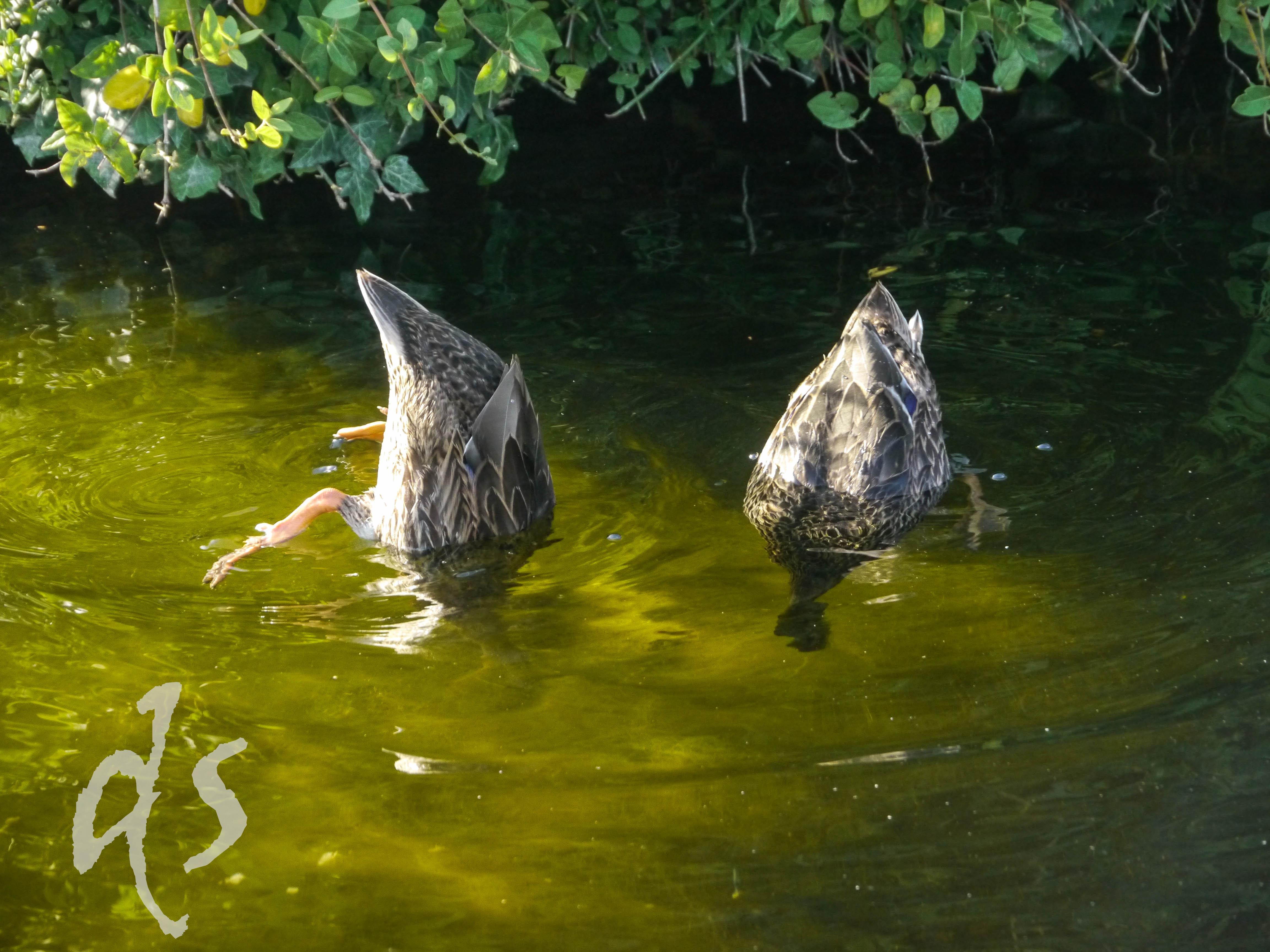 Entspannen wie Wiener Enten: einfach mal im Grünen untertauchen