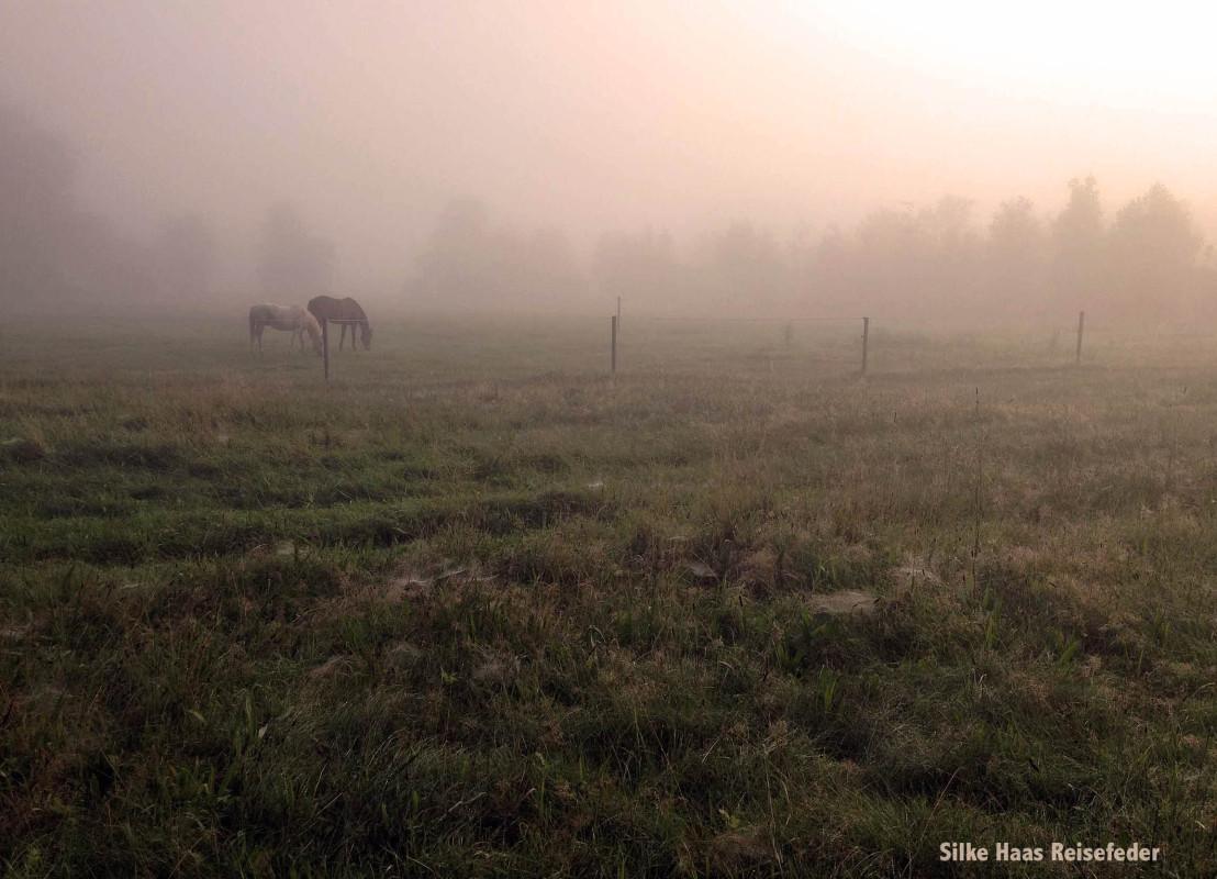 Pferde grasen im herbstlichen Morgen