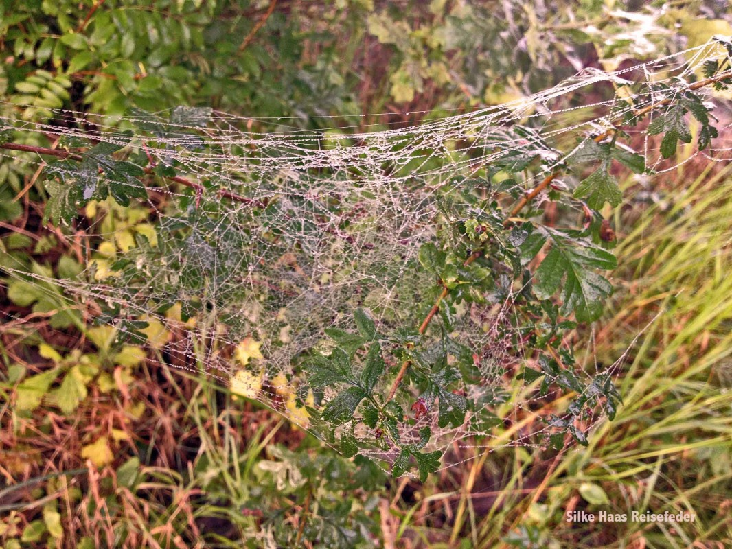 Spinnweben im gelb bunten Gras im Herbst in Hamburg
