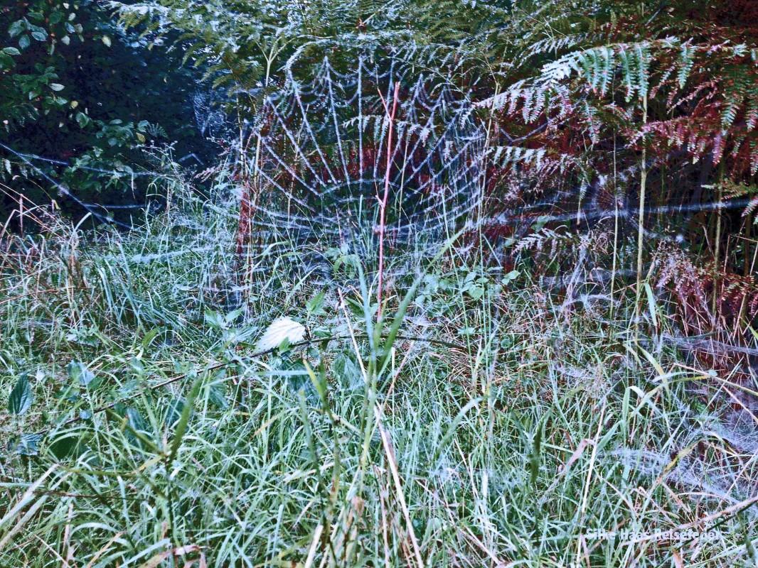 Spinnennetz im herbstlich bunten Gras in Hamburg