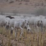Auf der Wollroute: Gekommen um zu teilen