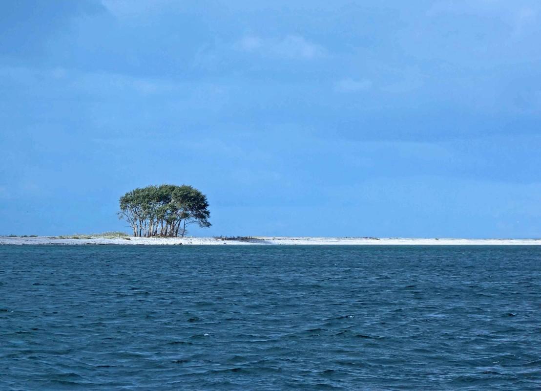 Weißer Sandstrand, blauer Himmel und ein paar Bäume. Sieht aus wie die Karibik, ist aber Schleimünde