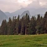 Chiemgau: Bauernhof, Berge und See