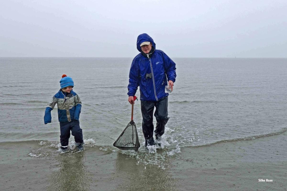Wattführer und ein Kind im knöcheltiefen Wasser auf Krabbenfang vpr Büsum