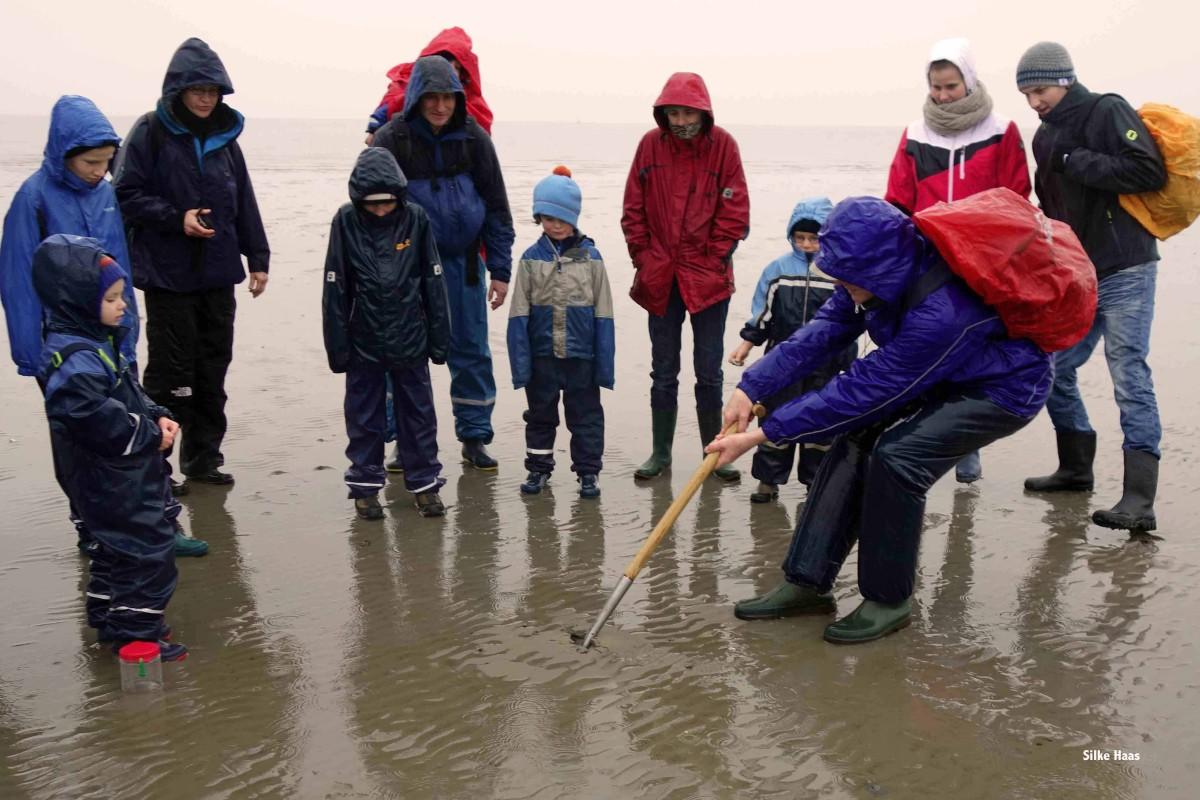 Eine Gruppe Wattwanderer beobachtet den Wattführer, der ein Loch gräbt