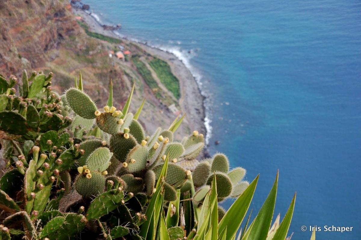 Madeira Aussicht