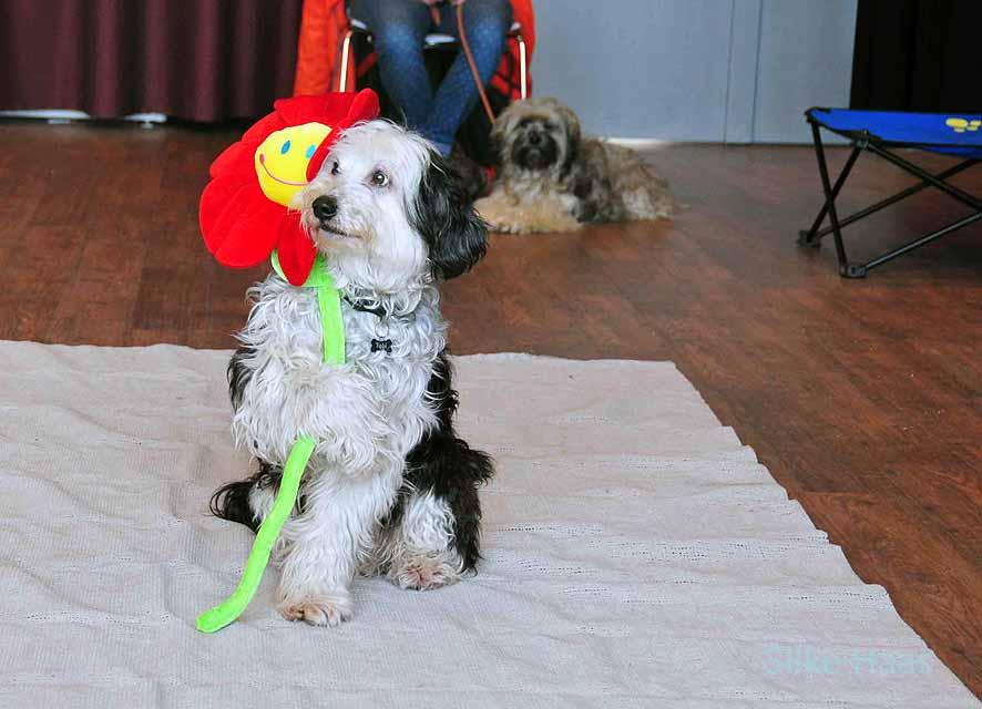 Filmhund Tobi von Rosi Lachmann hält eine Plüschblume
