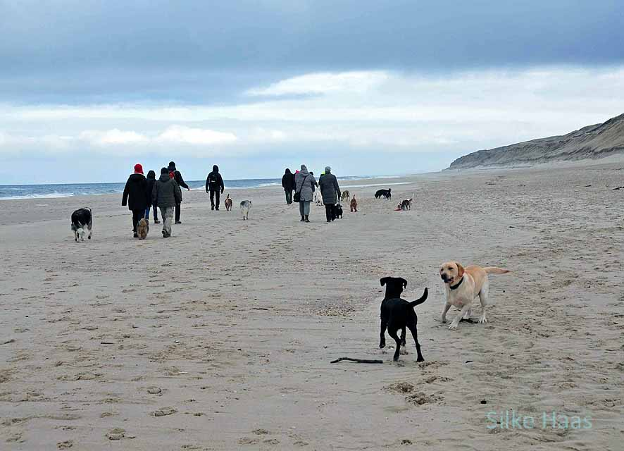 Menschen mit ihren Hunden am Strand von Sylt