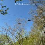 Megazipline und Ilsetal: Spannung und Entspannung im Harz