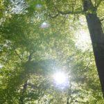 Grün und kühl – Deutschlands schönste Wälder