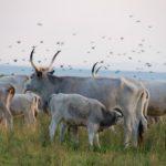 Auf Safari durch Europa