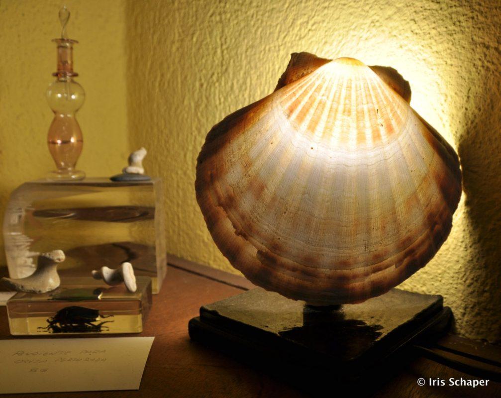 Jakobsmuschel-Lampe in Galicien