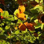 Herbstspaziergang in den Wäldern, poetisch