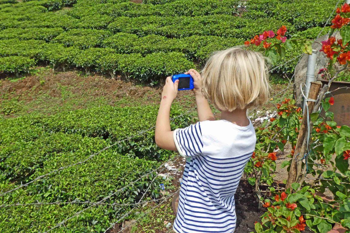 Kleines Kind fotografiert eine Teeplantage in den Kardamombergen bei Kumily