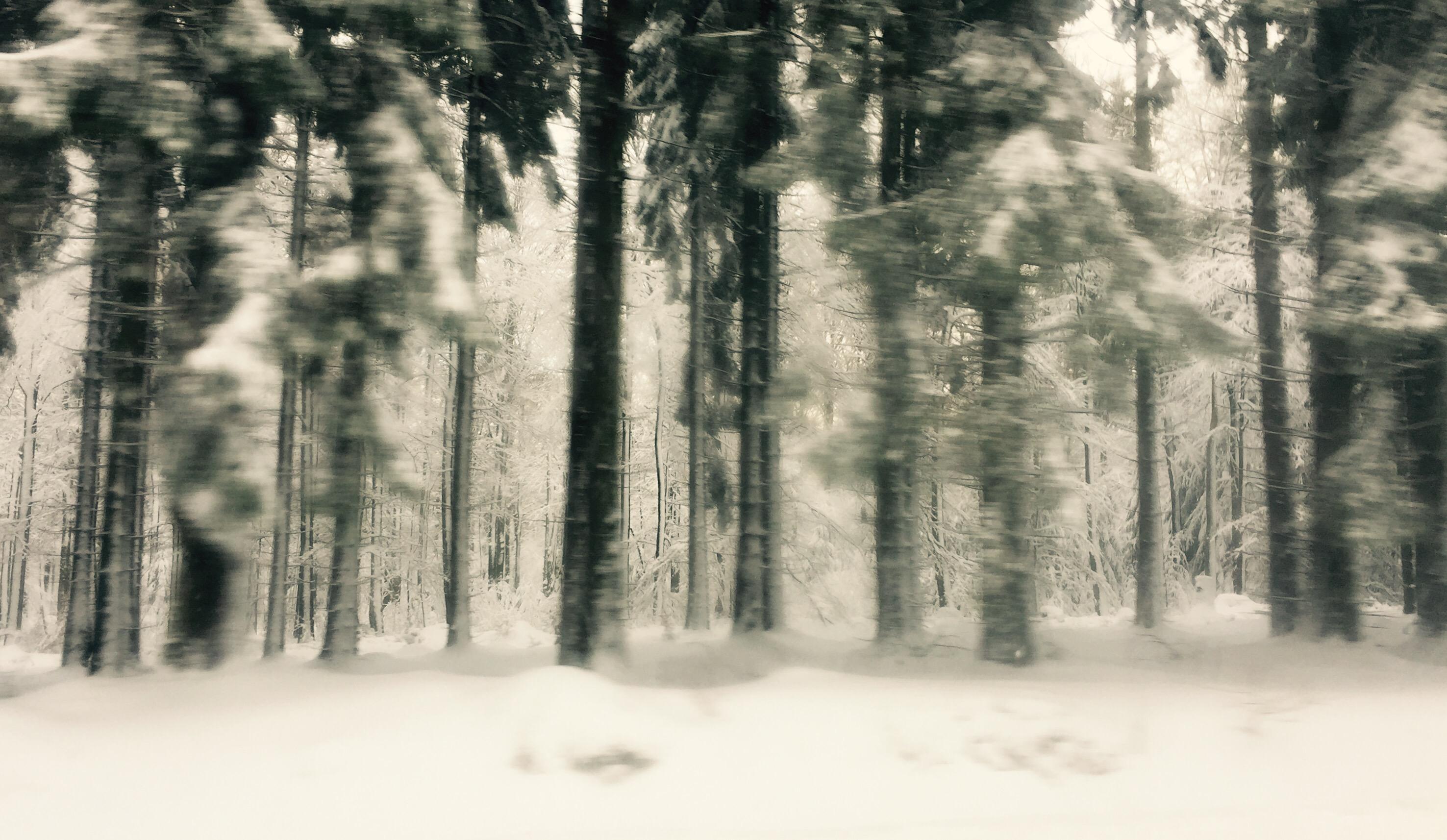 Verschneite Bäume bei der Autofahrt