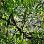 Im Nebelwald von Mindo: Zwischen Kolibris und Schmetterlingen