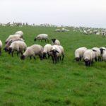 11 Tipps für… kleine Auszeiten in Norden und Norddeich