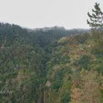 Eukalyptus: Europas Pest in Baumgestalt