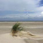 Meeresrauschen. Vom Glück, am Wasser zu sein – Rezension