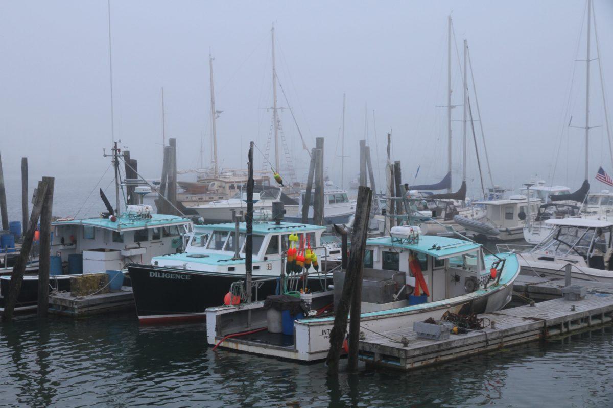 Maine, Bar Harbor, Hafen, Hummer
