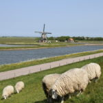 Texel: Von verwegenen Krabbenfischern
