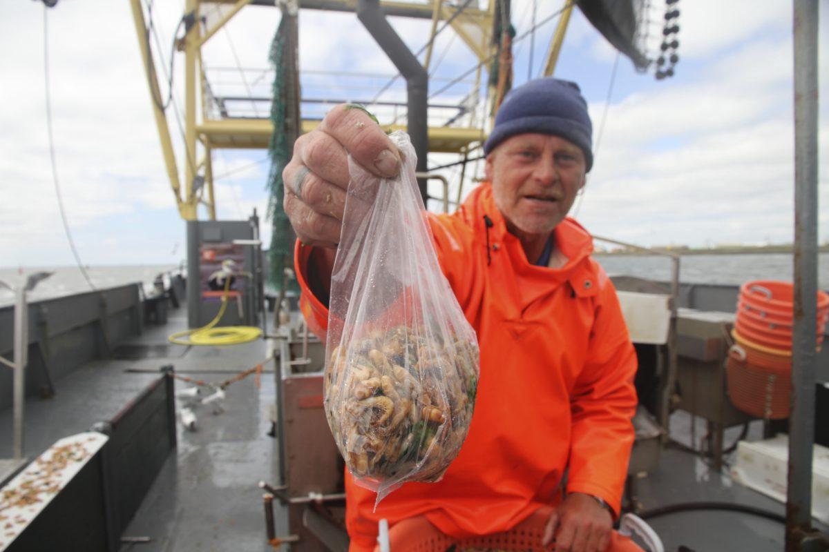Krabbenfischer, Holland, Texel