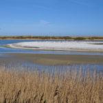 Tipps vom Naturfilmer: Die schönsten Hotspots im niederländischen Wattenmeer