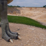 Im Tal der Dinosaurier: Deutschlands Jurassic Park