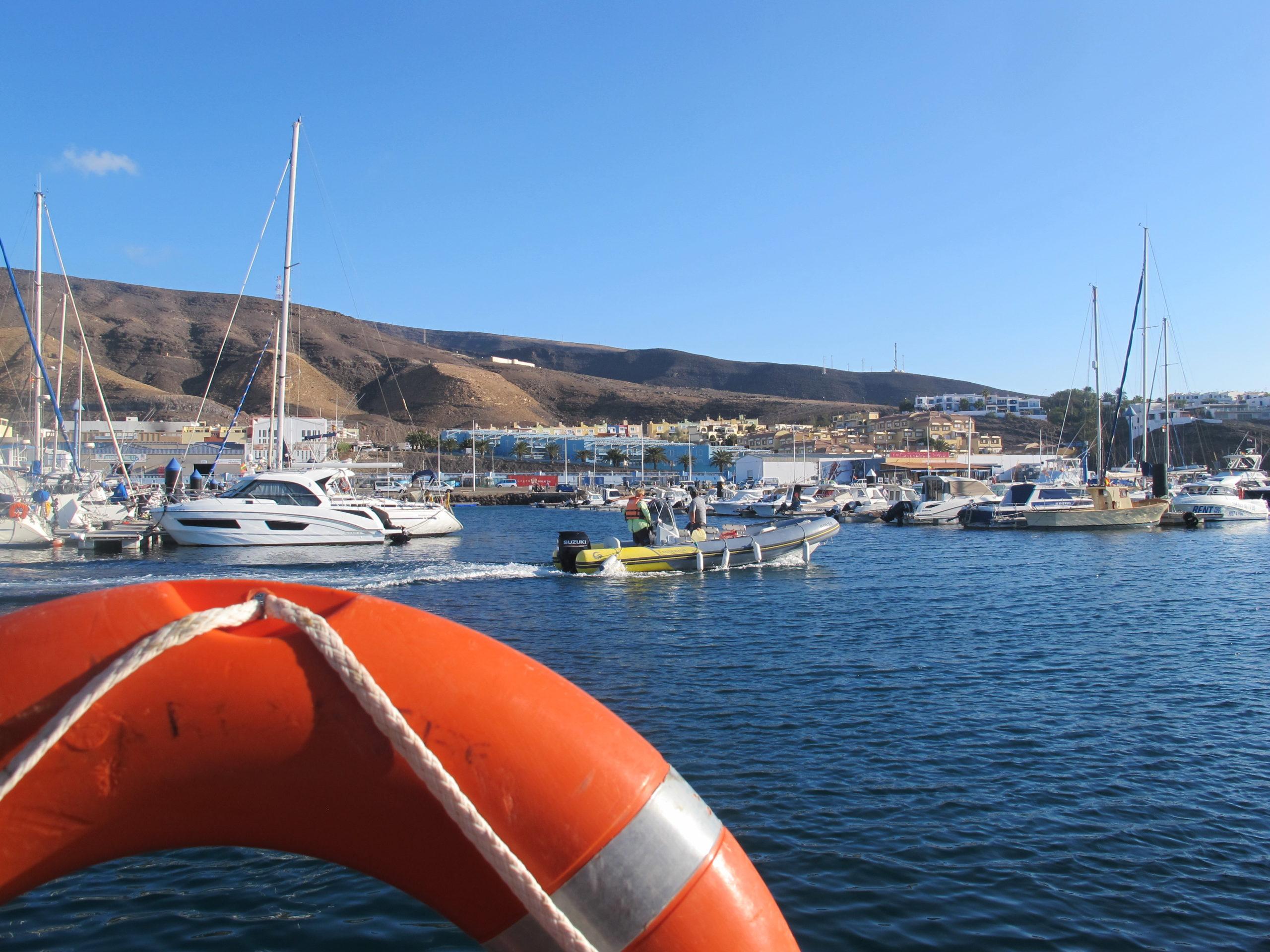 Fuerteventura, Delfine beobachten, Bootstour, Delfine, Süden von Fuerte, Morro